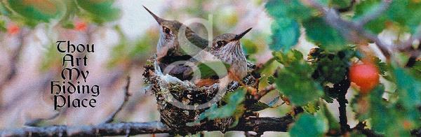 humming.birds.01